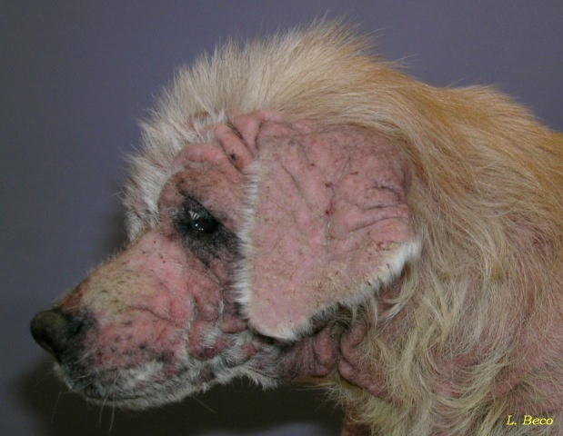 demodex treatment human #11
