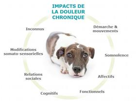 Impact of pain in dogs (Zoetis)