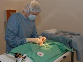Surgery in our practice