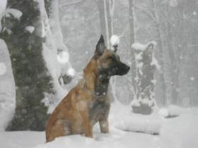 Pet nutrition during cold winter