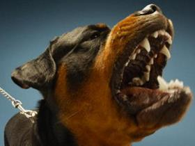 Dangerous dog - Dog breed and aggressiveness