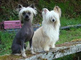 Rocky and Lady - Miss Errens - Gemmenich (Dermatology - Demodicosis)