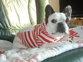"French Bouledogue ""Lisa"" - Miss Ott - Limal (Frenc Bouledogue Allergic)"