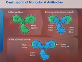 mAbs: monoclonal antibodies: caninization (www.itchcycle.com/antibodytherapy)