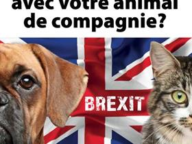 Brexit and pet travels - Brexit for your dog and cat: are you ready for it?